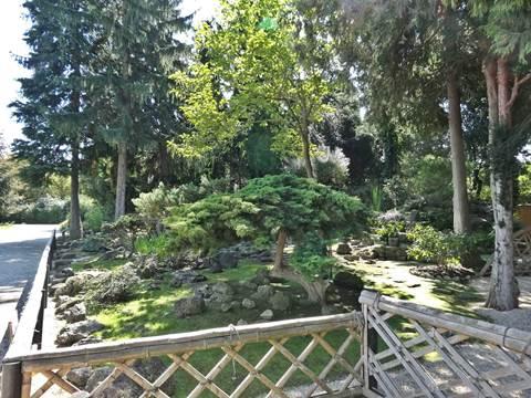 Japanese Garden Schönbrunn